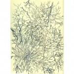 DE OLORES Y SENSACIONES Tinta sobre papel 29,5 x 21 cm
