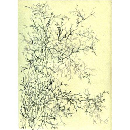 ESTRUCTURA DE UNA EMOCIÓN Tinta sobre papel 29,5 x 21 cm