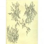 RECORRIDO Y HUELLA DE UN PENSAMIENTO Tinta sobre papel 29,5 x 21 cm